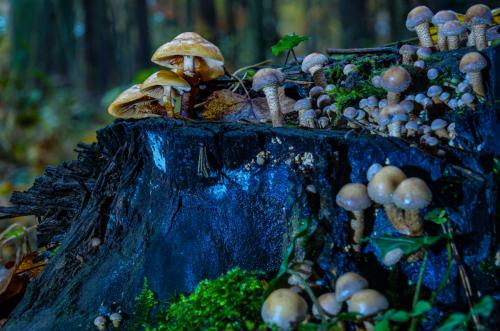 Pilze auf Baumstumpen